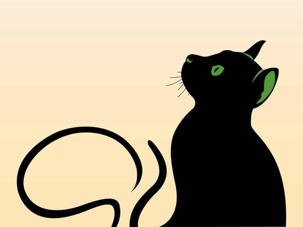 Cat-Graphics