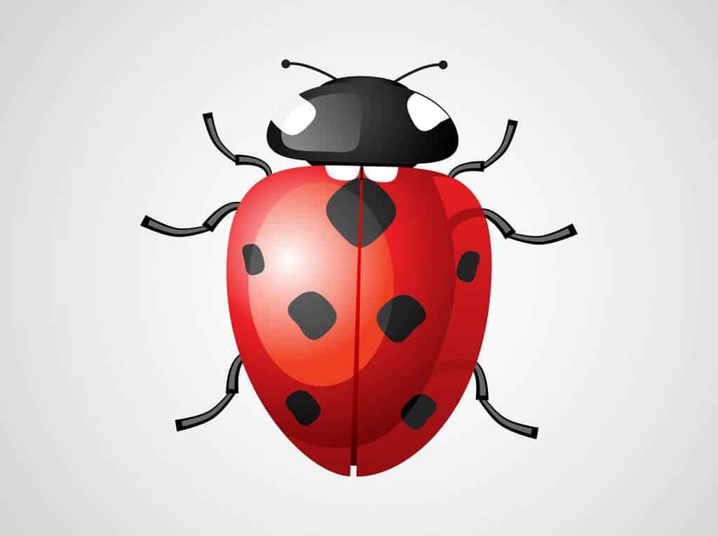 Ladybug-Vecgtor