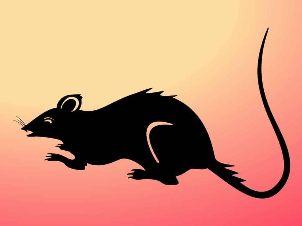 Rat-Silhouette