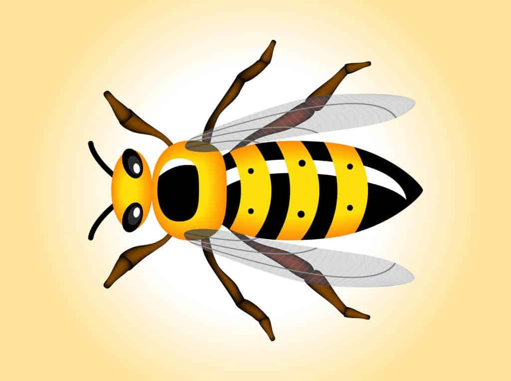 Wasp-Vector