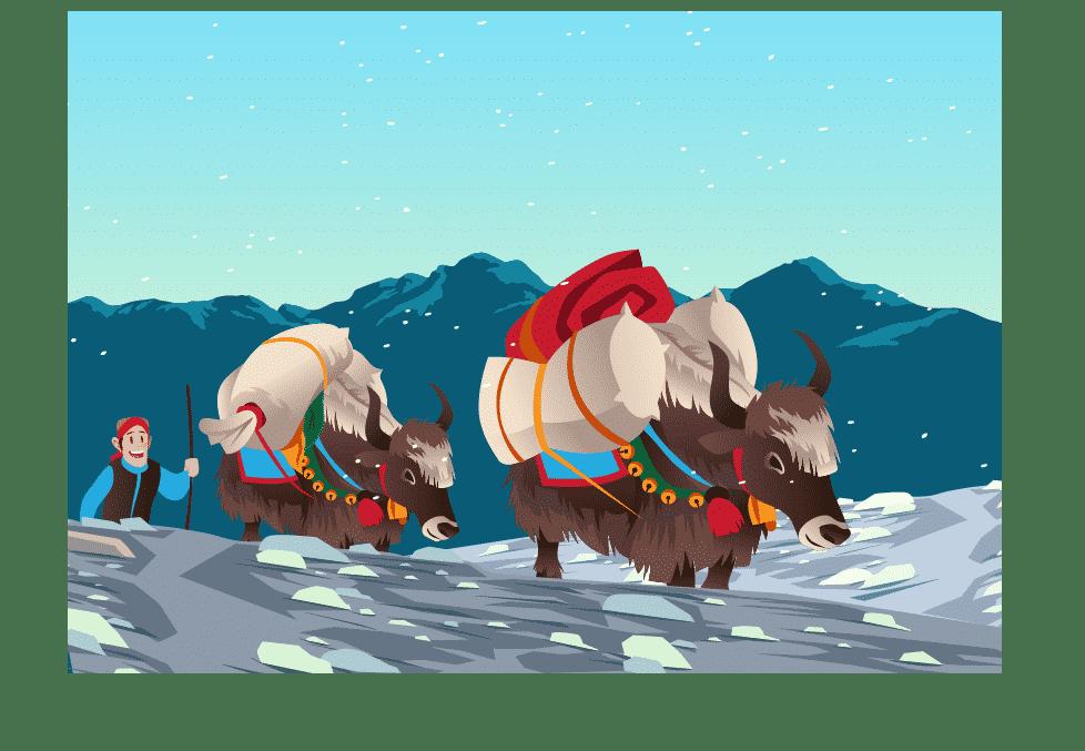 Yaks Carrying Heavy Loads