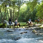 french summer school horse riding